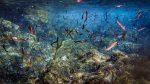 Sousleaugraphie hédonistique : Algues au rythme de Nicolas de Chamfort