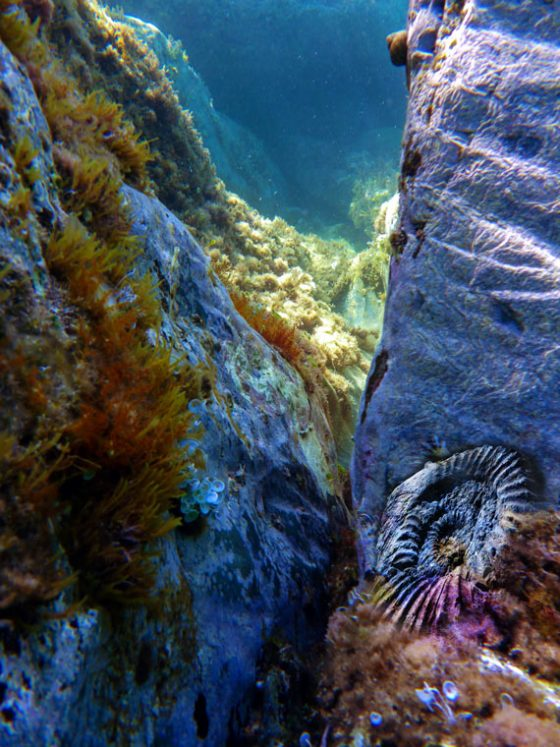 Etude: Ammonite et fond marin actuel (2017)