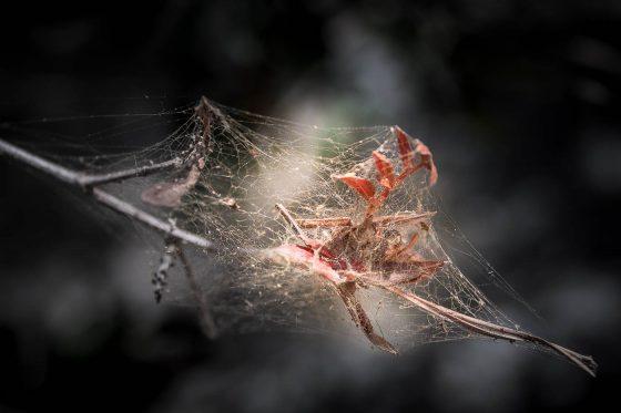 Entomogamie