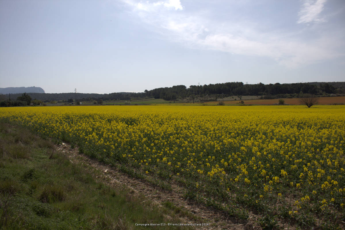 campagne aixoise 013