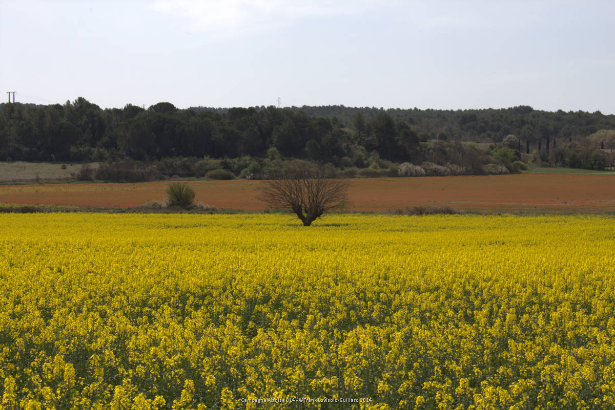 campagne aixoise 014