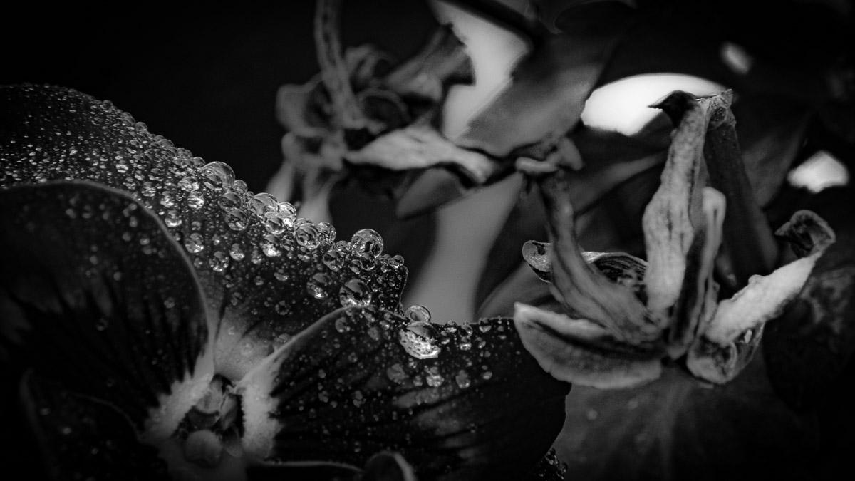 n019 confit noir frank lovisolo guillard