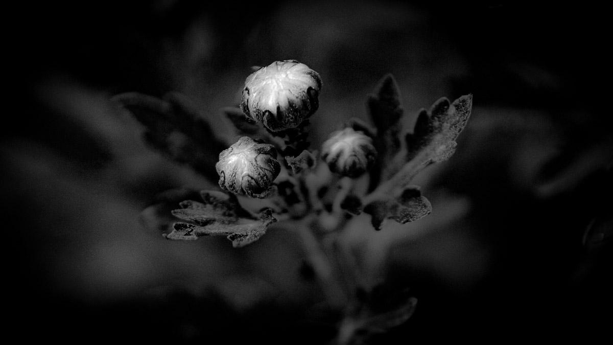 n021 confit noir frank lovisolo guillard
