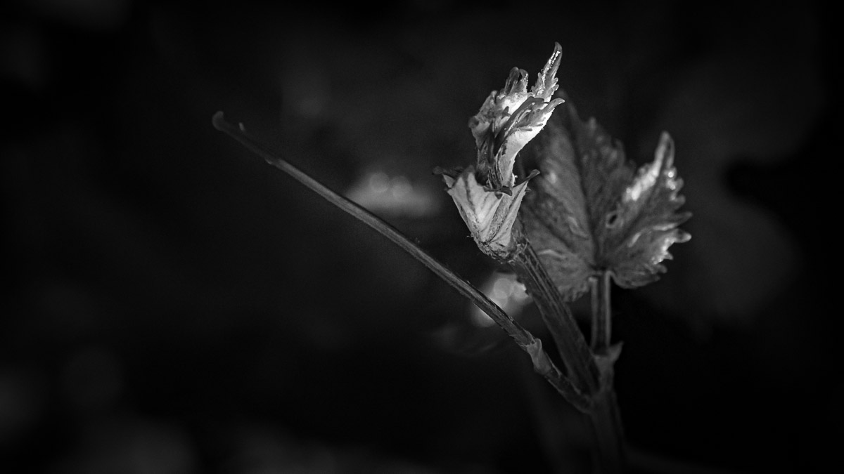 n025 confit noir frank lovisolo guillard
