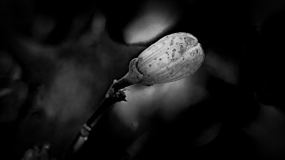 n026 confit noir frank lovisolo guillard