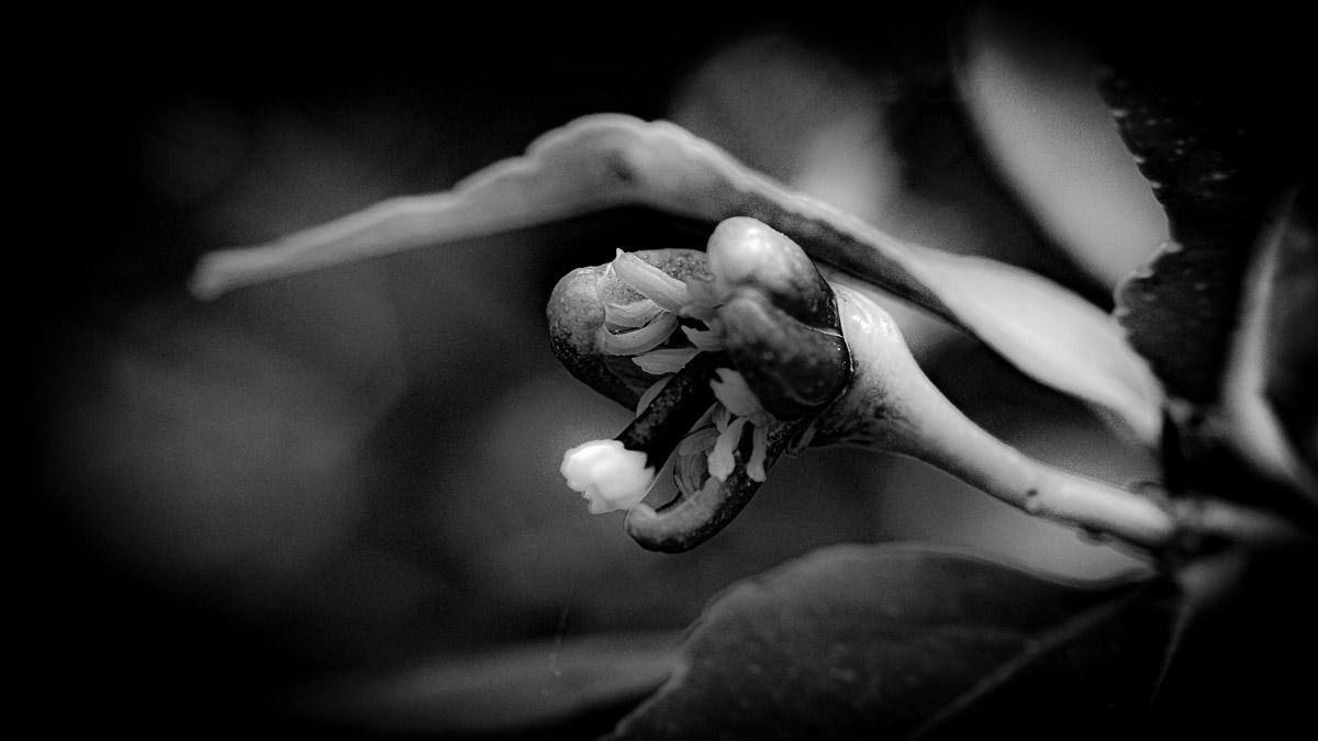 n028 confit noir frank lovisolo guillard