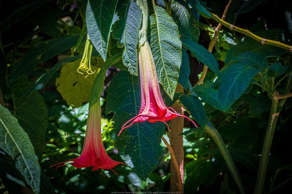 Jardin Botanique Hanbury