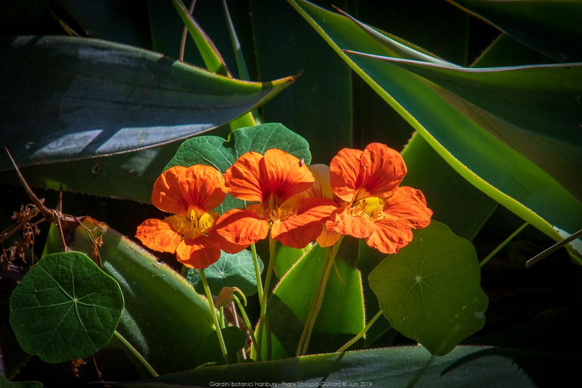 Giardini botanici Hanbury