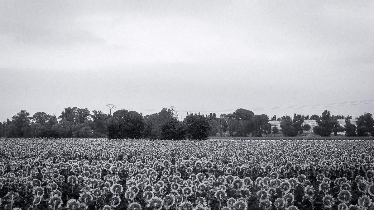 paysages en roulants juillet 2019 n015