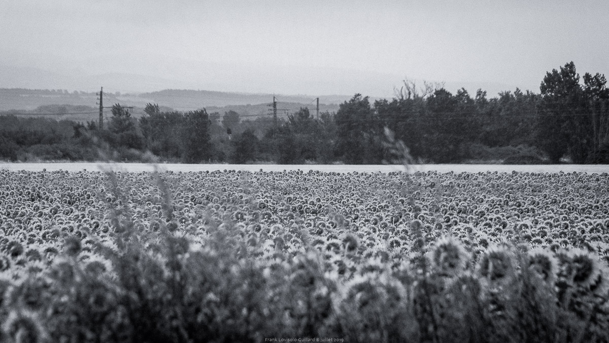 paysages en roulants juillet 2019 n026