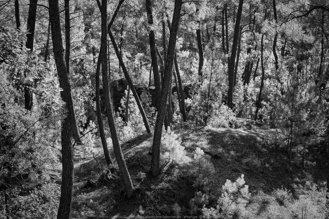 un syndrome forestier de letrange 001
