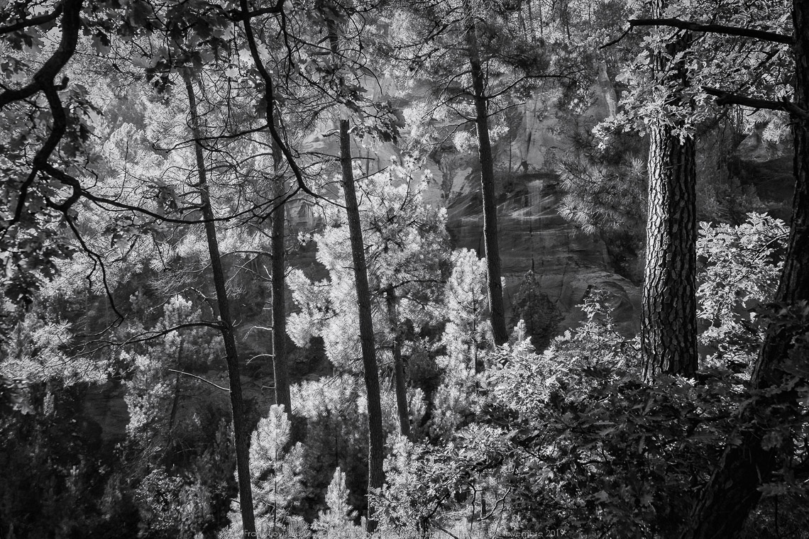 un syndrome forestier de letrange 002