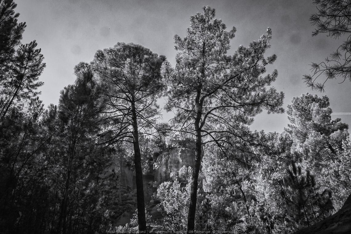 un syndrome forestier de letrange 006