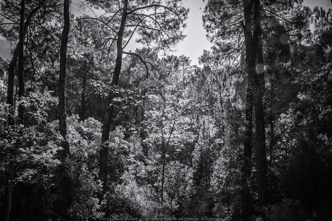 un syndrome forestier de letrange 007