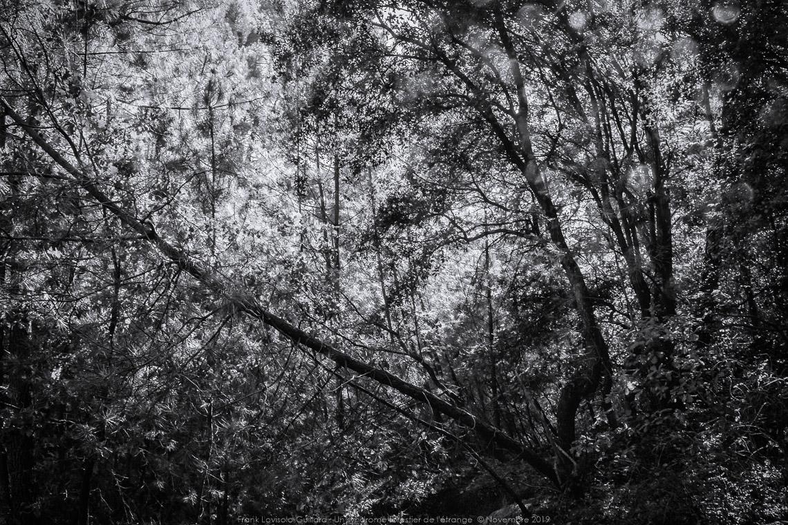 un syndrome forestier de letrange 008