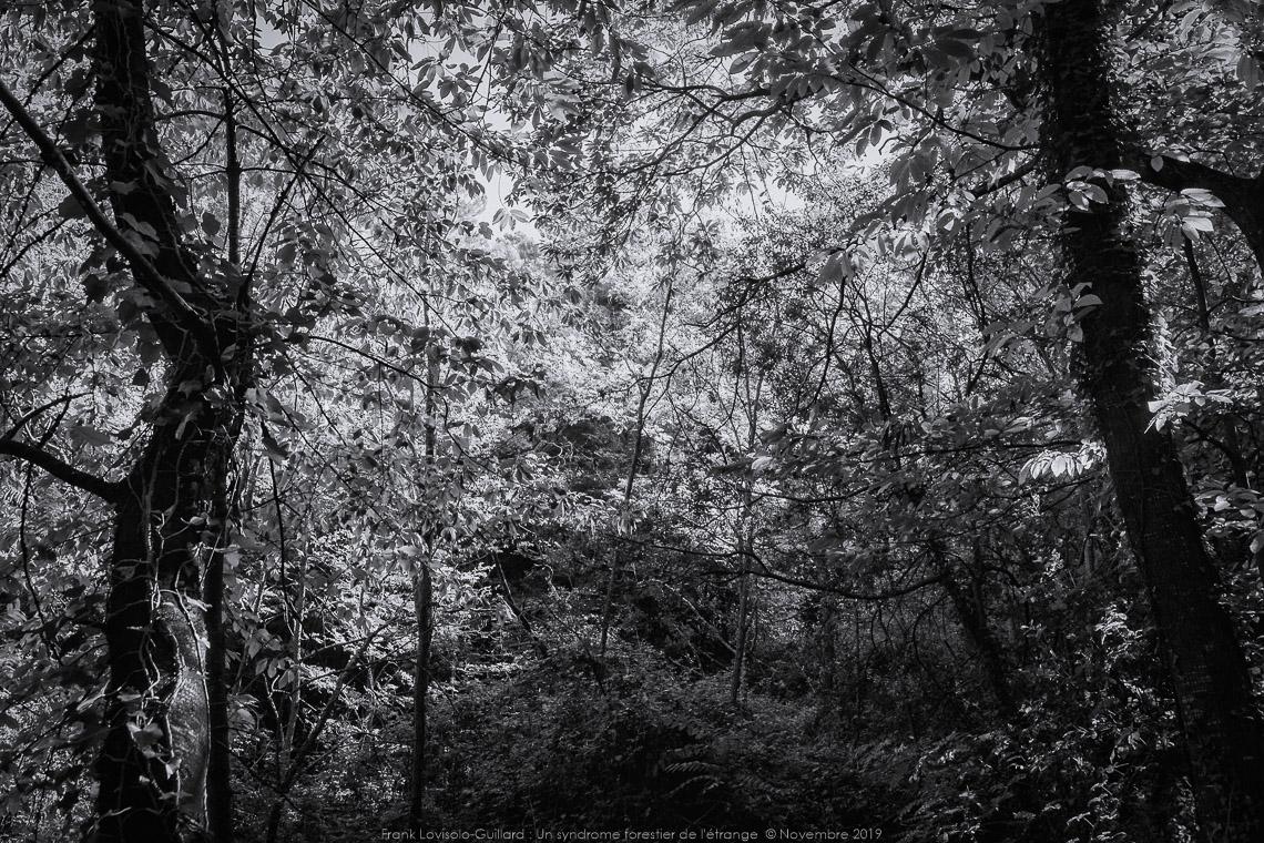 un syndrome forestier de letrange 009