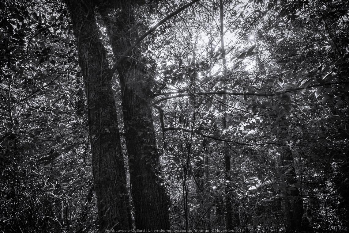 un syndrome forestier de letrange 011