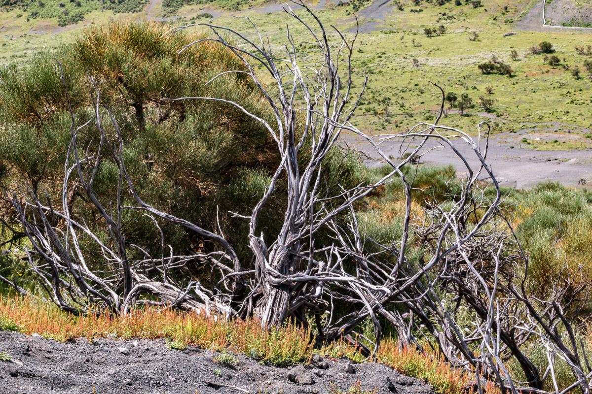 isola di vulcano la fossa 039