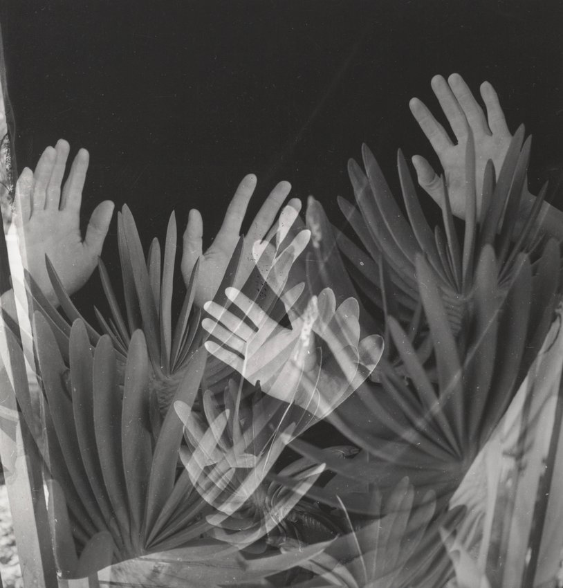 Hands and Aloe Plicatilis - Imogen Cunningham