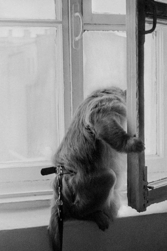 Monkey - Leningrad, USSR, 1978 | Masha Ivashintsova