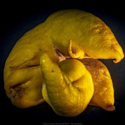 Kamacitrons – Soixante postures acidulées avec mamelons et pédoncules distordus.
