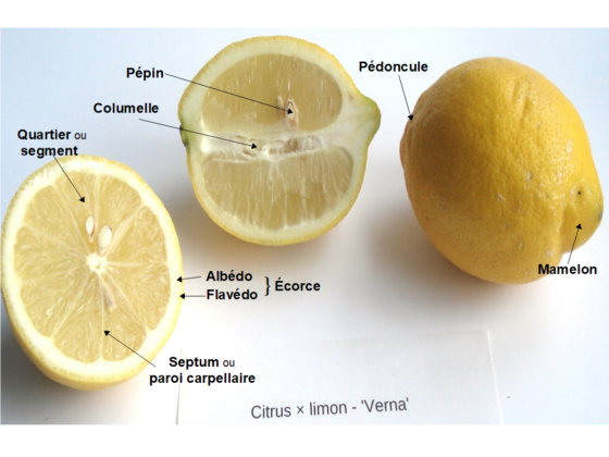 Parties des citrons