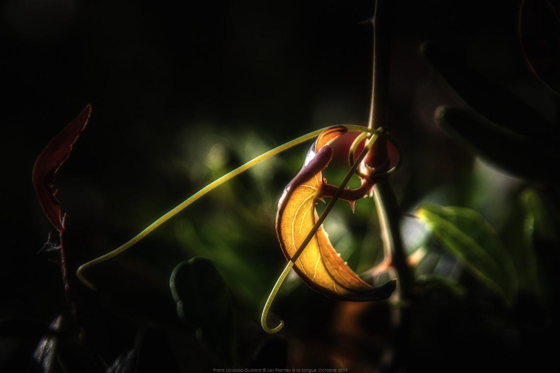 Les Plantes à la Sorgue 014