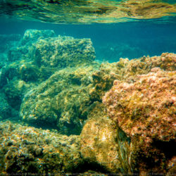 Sousleaugraphie archéologique: Randonnée sous-marine d'Olbia à Hyères