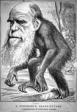 Caricature de Darwin dans The Hornet le 22 mars 1871 page